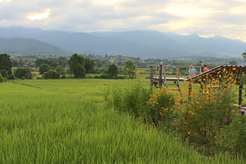 campo di riso a Pai