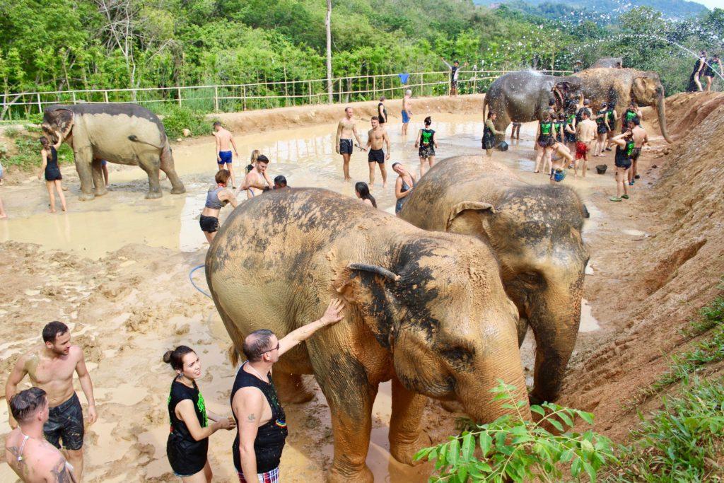 Elefanti nel santuario