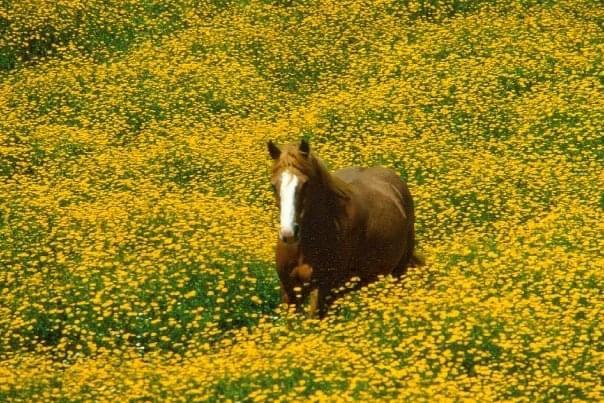 Cavallo: Maremma selvatica Tour